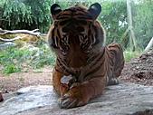 S.F Zoo:IMGP1205