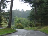 幽暗密林--Golden Gate Park:DSC03279