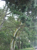 幽暗密林--Golden Gate Park:DSC03282
