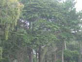 幽暗密林--Golden Gate Park:DSC03283