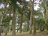 幽暗密林--Golden Gate Park:DSC03240