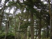 幽暗密林--Golden Gate Park:DSC03241