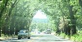 NAPA酒廠一日遊:很美的綠色隧道  可惜不能下車好好拍一張