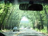 NAPA酒廠一日遊:漂亮的綠色隧道