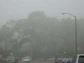 霧中森林:DSC03475