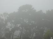 霧中森林:DSC03476
