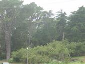 幽暗密林--Golden Gate Park:DSC03243