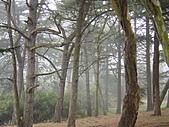 霧中森林:DSC03481