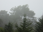 霧中森林:DSC03482