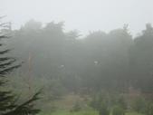 霧中森林:DSC03484