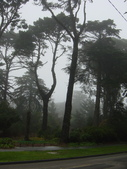 霧中森林:DSC03485