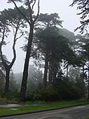 霧中森林:DSC03486
