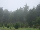 霧中森林:DSC03488