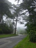 霧中森林:DSC03489