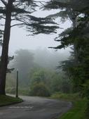 霧中森林:DSC03490