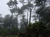 霧中森林:DSC03492