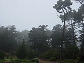 霧中森林:DSC03493