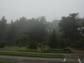 霧中森林:DSC03494