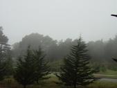 霧中森林:DSC03496