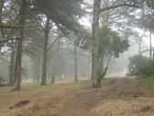 霧中森林:DSC03497