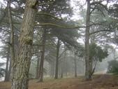 霧中森林:DSC03498