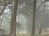 霧中森林:DSC03499