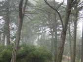 霧中森林:DSC03500