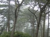 霧中森林:DSC03501