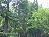拜訪董牧師:12-植物園一景