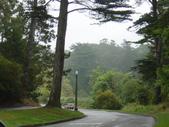 幽暗密林--Golden Gate Park:DSC03248