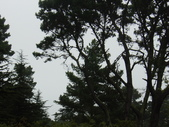 幽暗密林--Golden Gate Park:DSC03267