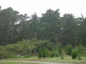 幽暗密林--Golden Gate Park:DSC03252