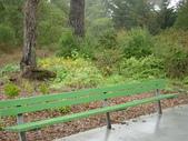 幽暗密林--Golden Gate Park:DSC03253