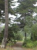 幽暗密林--Golden Gate Park:DSC03260