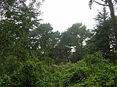幽暗密林--Golden Gate Park:DSC03254