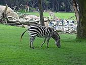 S.F Zoo:DSC03620