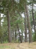 幽暗密林--Golden Gate Park:DSC03264