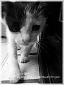 貓咪寫真‧剛撿到的哞哞:DSC01836.JPG