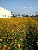 2010年大寮鄉紅豆文化節暨賞花行:0066.JPG