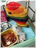 貓咪寫真‧剛撿到的哞哞:DSC01846.JPG