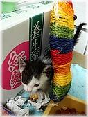 貓咪寫真‧剛撿到的哞哞:DSC01851.JPG