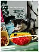貓咪寫真‧剛撿到的哞哞:DSC01860.JPG