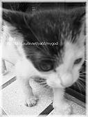 貓咪寫真‧剛撿到的哞哞:DSC01871.JPG