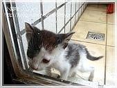 貓咪寫真‧剛撿到的哞哞:DSC01882.JPG