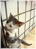 貓咪寫真‧剛撿到的哞哞:DSC01883.JPG