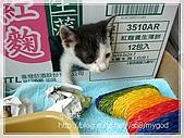 貓咪寫真‧剛撿到的哞哞:DSC01900.JPG