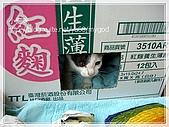 貓咪寫真‧剛撿到的哞哞:DSC01902.JPG