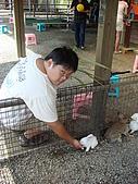 乳牛的家:可愛兔子區.5