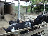 乳牛的家:羊咩咩區.1