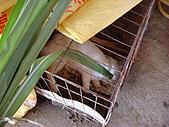 乳牛的家:可愛兔子區.6